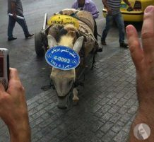 تاكسي حمار