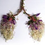 تكوين الرئتين من النباتات