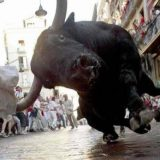 ثور يهاجم مصور