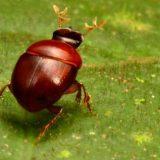 حشرات جديدة