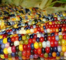 ذرة الجواهر الزجاجية الملونة