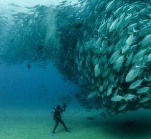 سرب من الأسماك