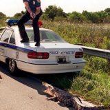 شرطي هارب من تمساح