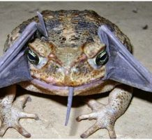 ضفدع يأكل خفاش