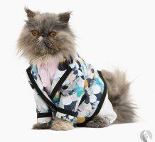 قطط بملابس