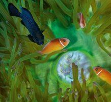 الحياة البحرية