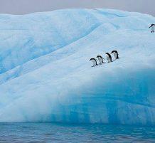 الحياة البرية في القطب الجنوبي