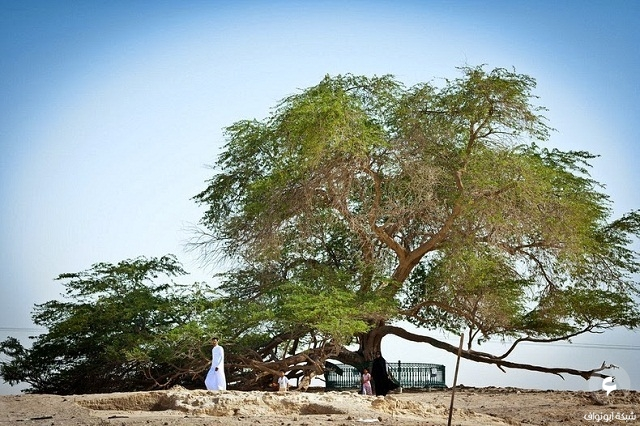 شجرة الحياة