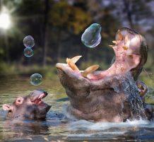 صور طبيعة ممزوجة مع الخيال