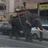 فيل في الشارع