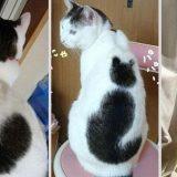 قطة بفراء غريب
