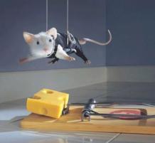 مهمة الفئران