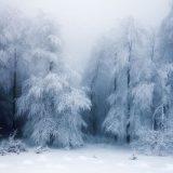الطبيعة في فصل الشتاء