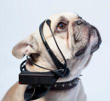 ترجمة أفكار الكلاب إلى كلمات إنجليزية