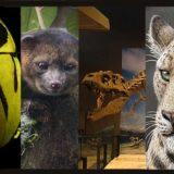حيوانات غريبة تم إكتشافها عام 2013