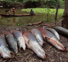 سمكة الأربمية