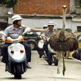 شرطة تلاحق حيوانات في الشوارع