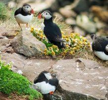 طيور من فوق مرتفعات أيسلندا