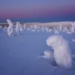 أشجار متجمدة في مناطق درجة حرارتها تحت الصفر