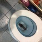 أفعى ضخمة تم الإمساك بها داخل احد حمامات منزل