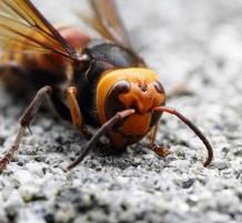 الحشرات القاتلة