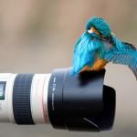 تصوير الأماكن الطبيعية