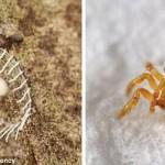 حل غموض الكائنات الجديدة التى تم إكتشافها فى الامازون