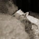 حيوانات مسنة باللون الأبيض و الأسود