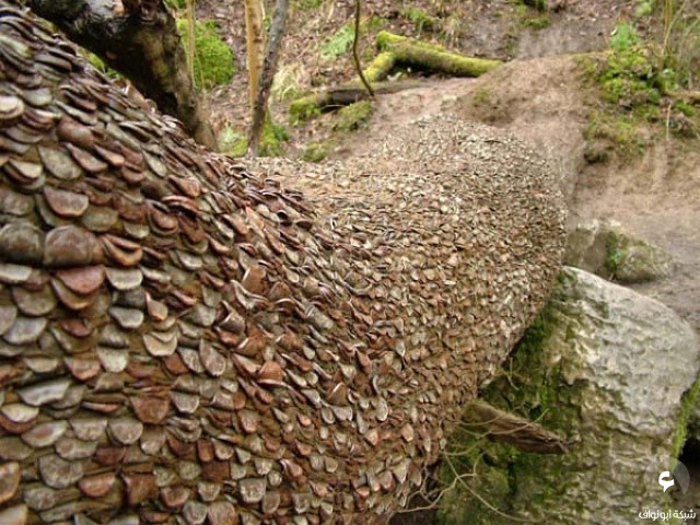 شجرة نقود
