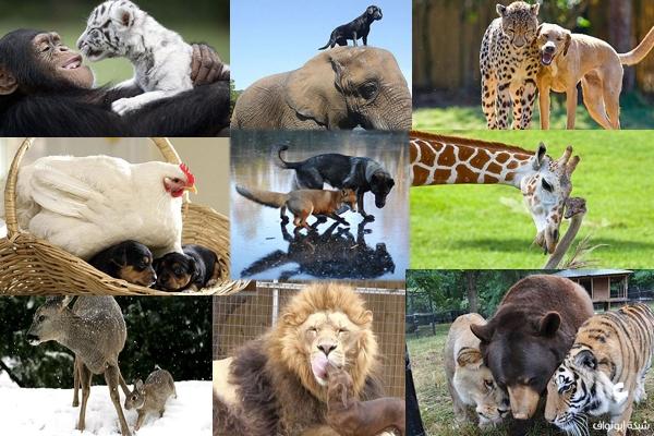 صداقة غريبة بين الحيوانات
