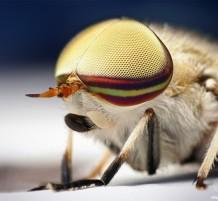 صور ماكرو للحشرات