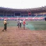 عشب الملاعب