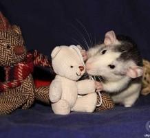 فئران تلعب مع الدمى