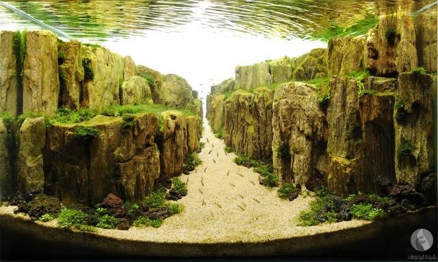 مسابقة عالمية لصنع أحواض السمك النباتية