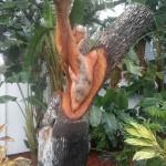 حشرة أتلفت شجرة وأتلفتها