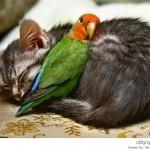 حيوانات نائمة مع بعضه