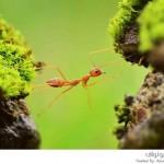 مسابقة الصور الطبيعية السنوية