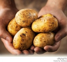 البطاطا