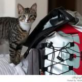 القط الرحالة