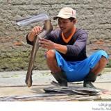جلود الثعابين لأجل الماركات العالمية