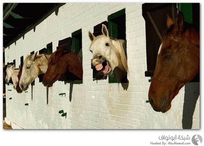 حيوانات تضحك