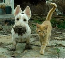حيوانات لطيفة