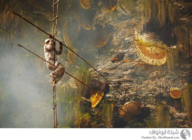 صيد العسل في نيبال
