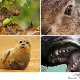 جمال الحيوانات البريطانية