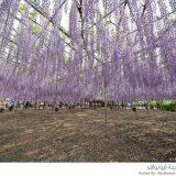 حدائق اليابان