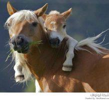 حيوانات مضحكة