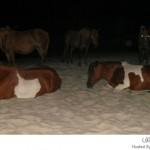 أفضل مكان لمحبي الخيول