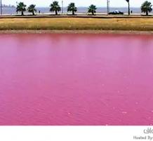 بحيرة هيلر الوردية