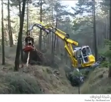 تقطيع الأشجار