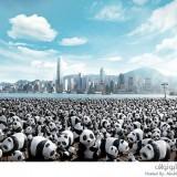 دببة الباندا الورقية